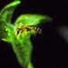 Bee Snoozing