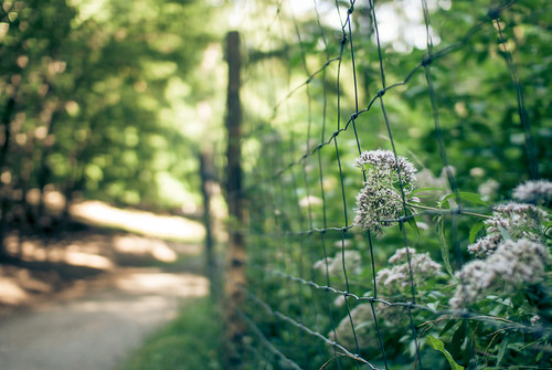 summer fence | by >TIM<