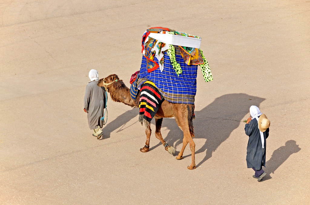 Tunisia 4483 Camel With A Howdah Please No Multi