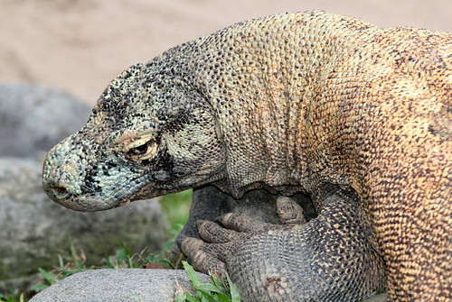 Asia - Indonesia / Komodo | by RURO photography