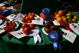 Prize Winning Heirloom Tomatoes | by alasam