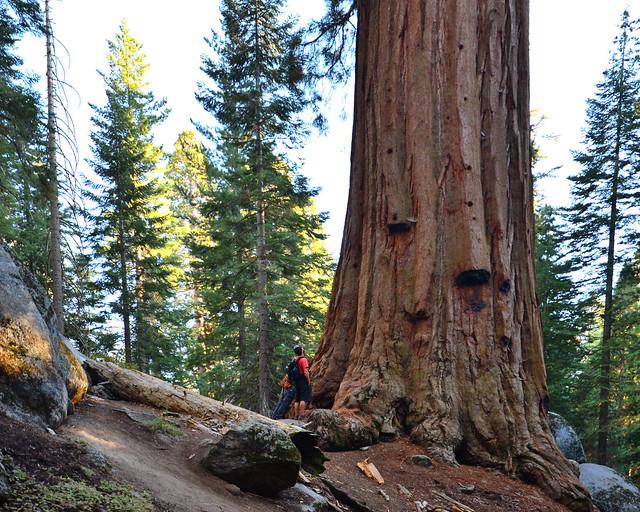 Gigantescas secuoyas junto a dos personas que hace que se aprecie perfectamente el gigantesco tamaño de los árboles