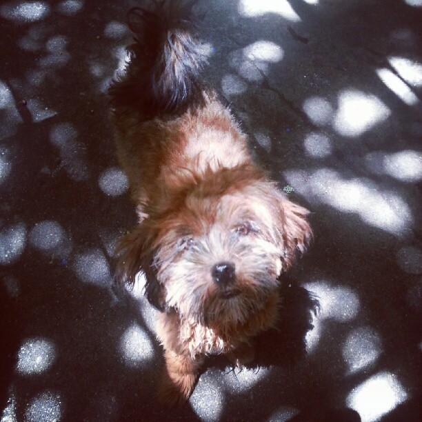 Shadows of a Cute Dog