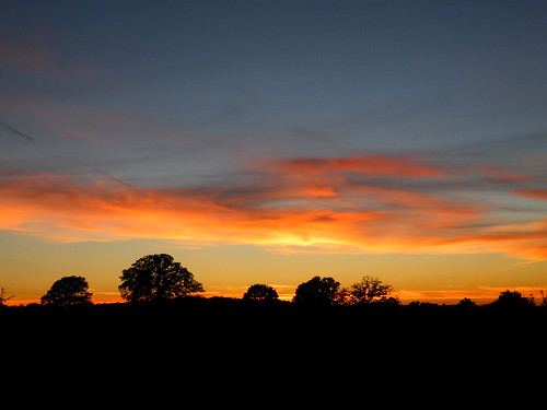 sep2012 sep 8th tree line at sunset | by rospix