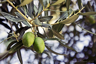 Wonderful Greek Olives | by Tanjica Perovic