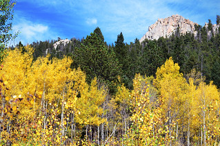 aspens and pines | by heartinhawaii
