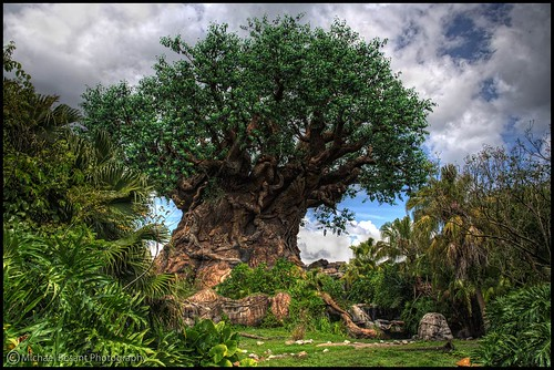 Disney's Animal Kingdom (Post 1 of 2 today) | by Michael Besant