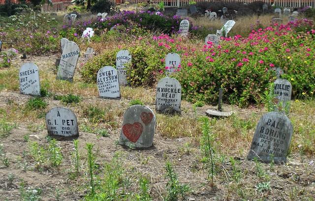 Presidio Pet Cemetery 2 Flickr Photo Sharing