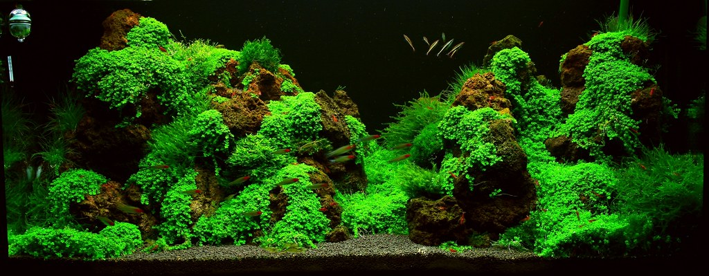 Mountain Aquascape | By Blikss Mountain Aquascape | By Blikss