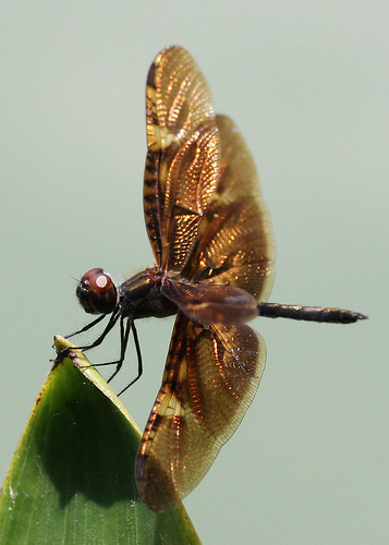 Dragonfly | by shelleyK2