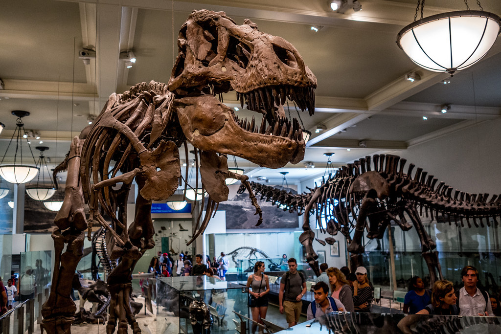 American Museum of Natural History | People taking a look ...