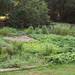 August 10 garden journal