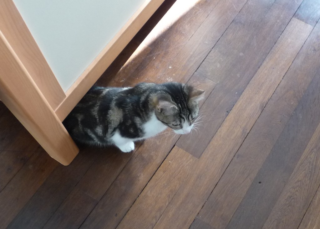 Rspca Free Cat Microchipping
