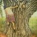 treeclimber (2)