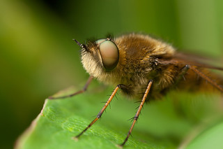 FLY 2012 | by GOLDENORFE