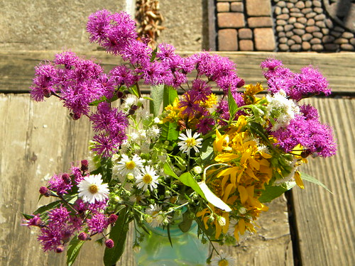 Fall Wildflowers,Ironweed,Frostweed,Goldenrod and Fleabane! | by John C. Akers jr.