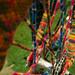 2012-02-26 0779a  Thailand