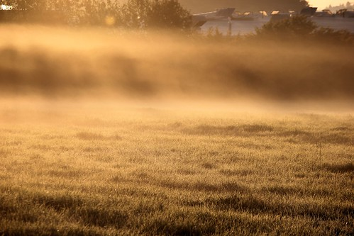 Morgennebel im Sonnenlicht - Another misty morning | by diemolu