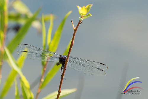 Dragon Fly -8002255 | by kirbinster