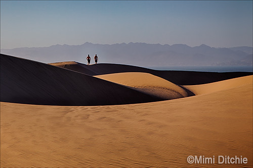 Dune Runners | by Mimi Ditchie