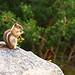 colorado-squirrel