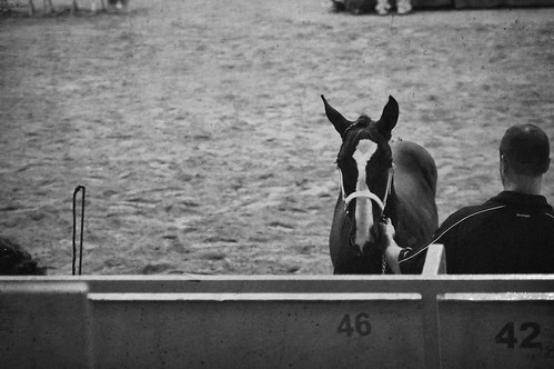 Horse show | by Kimberose