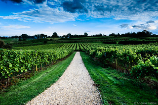 Three Choirs Vineyard-33 | by Andrew Callow