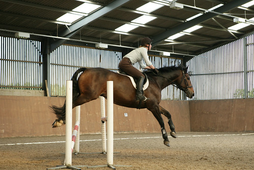 Equine & Horse Management