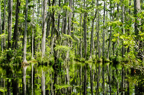 Cypress Gardens Charleston South Carolina By Jennifer Flickr