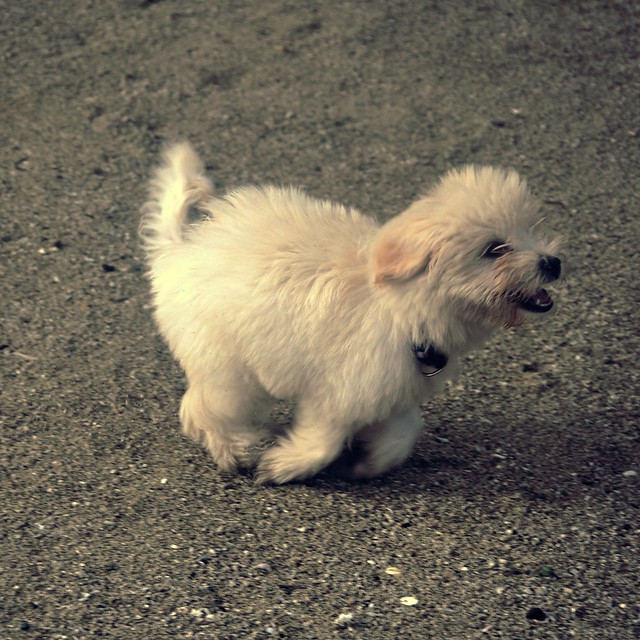 Puppy Crush Blauearth Flickr