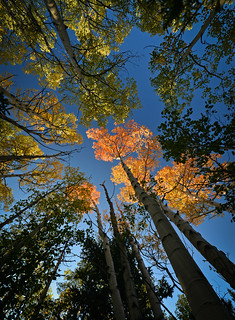 Aspen ablaze | by Bill Bowman (out of action)