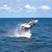 Whale Watching! 4