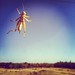 iPhone photo + Instagram of a grasshopper on the window of my house near Sperry, OK