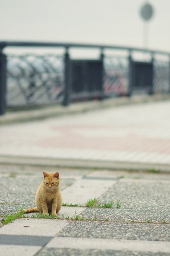cat (59) | by show- Z1