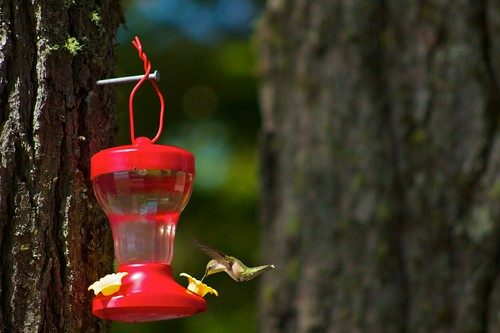 Hummingbird Feeder 6 | by Sherm Sherman