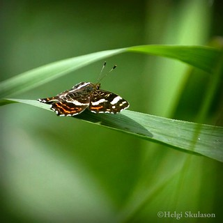Fly.......when your ready | by Helgi Skulason photographer