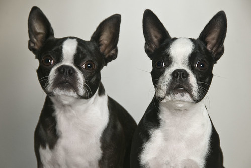 Bessie and Lula | by Photography South