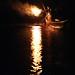 Cormorant fishing   ---鵜飼---