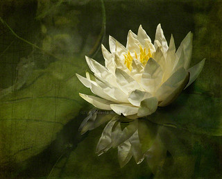 Lily's green world | by Celeste M (more off than on)