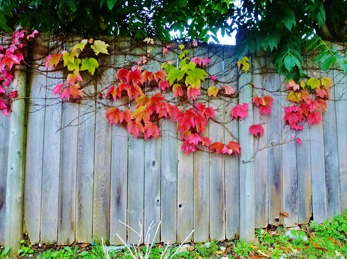 """AUTUMN IS A SECOND SPRING WHEN EVERY LEAF IS A FLOWER."" Albert Camus 