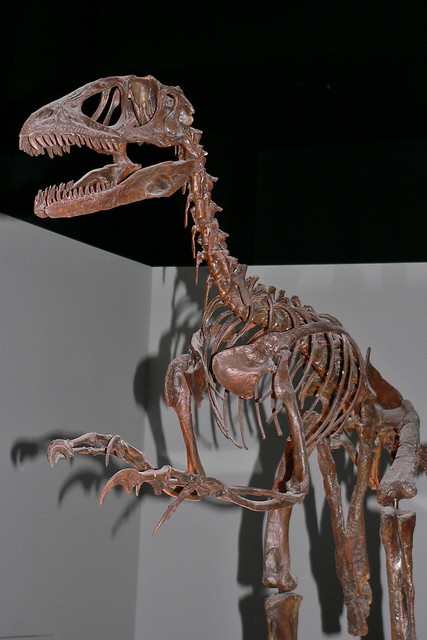 Velociraptor Skeleton | Flickr - Photo Sharing!