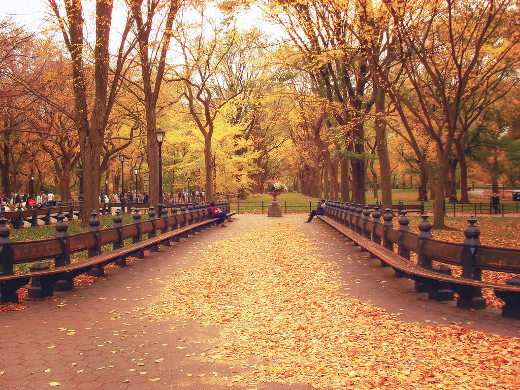 ... Autumn Leaves   Central Park   New York City | By Vivienne Gucwa