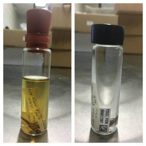 An odonata vial of ethanol before being redone and after being redone- side by side photos.