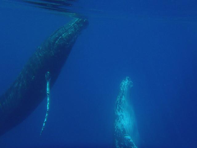 Best Whale Tours San Diego