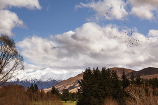 flying flock | by Nicks.Place