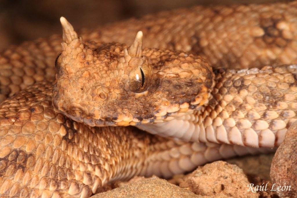 Animales del desierto yahoo dating 2