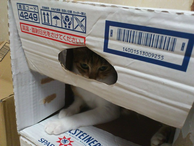 段ボール箱から猫パンチでニャッハー!