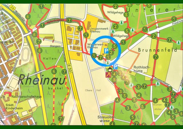 Wilde Wald-Brombeeren sammeln im Unteren Dossenwald in Mannheim (Rheinauer Wald). Wildgehege ... Pflanzen: Glockenblume, Johanniskraut, Natternkopf, Waldrebe, Stechapfel, Kronwicke ... Wildes Mannheimer Brombeer-Smoothie - Fotos und Collagen: Brigitte Stolle, August 2016
