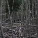 Lichens, Dead Spruce