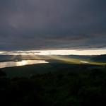 Gnus in Ngorongoro